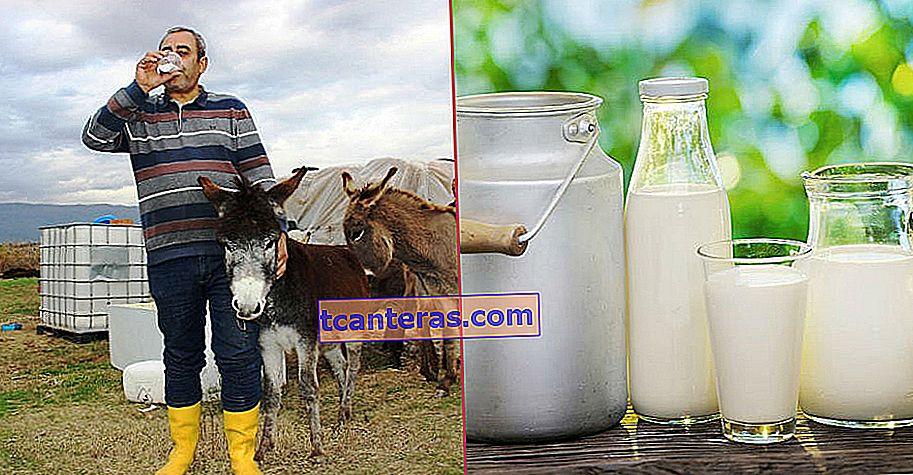 Un milagro natural equivalente a la leche materna que se vende a 100 liras el litro: la leche de burra