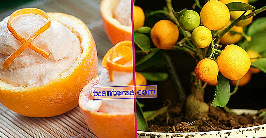 Winter Sun Orange de beneficios que no había escuchado antes para cultivar en casa