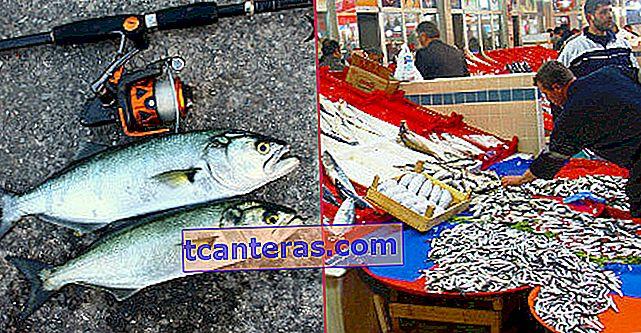 Aleatorio: datos que debe conocer sobre la pesca y las técnicas de pesca