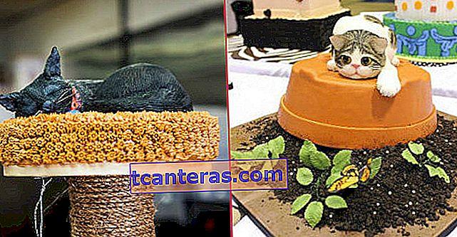16 pasteles con temática de gatos que ni siquiera tendrás que dejar de comer