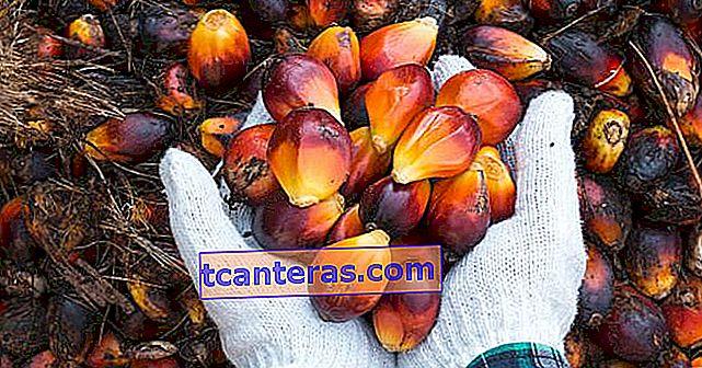 Las 5 cosas principales que debe saber sobre el aceite de palma
