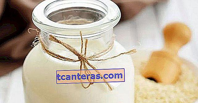 Що таке молоко з лободи, як воно виготовляється, що робить?