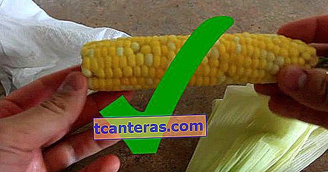 Sin luchar durante horas: ¿Cómo cocinar el maíz con leche más rápido?