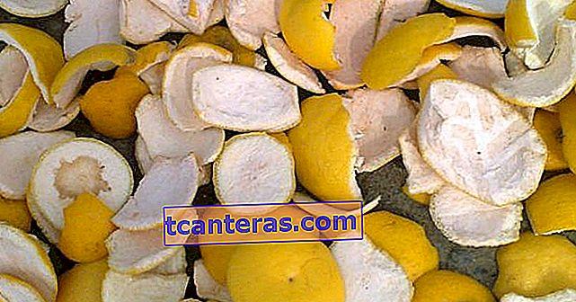 10 фруктових кірок, про які ви будете шкодувати невикористані невикористані