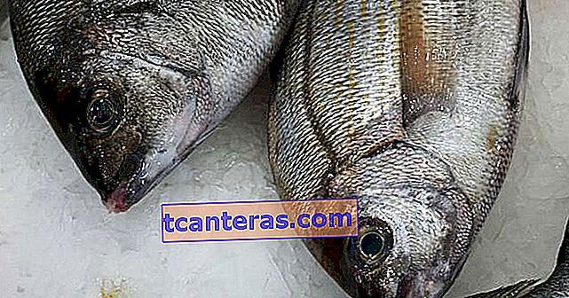 Puntos a considerar al comprar pescado