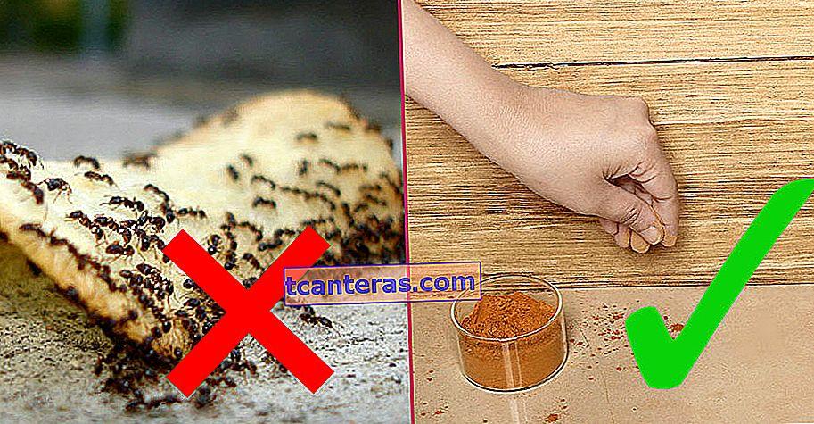Las 6 formas más fáciles e inofensivas de deshacerse de las hormigas que invaden la cocina