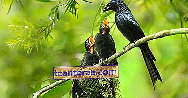 Свідчення того, що природа завжди прекрасна 15 птахів-годувальниць її немовляти