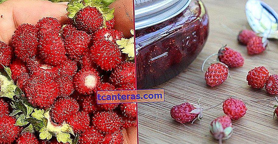 Presentamos el dulce aroma que te hará olvidar las fresas clásicas y los beneficios de la variedad: Mountain Strawberry