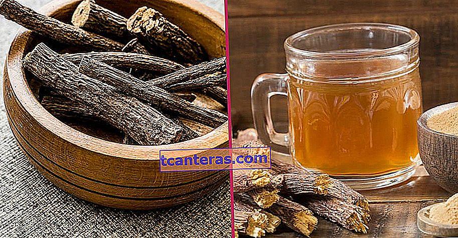 Una planta medicinal utilizada en el tratamiento de enfermedades respiratorias y estomacales durante siglos: raíz de regaliz