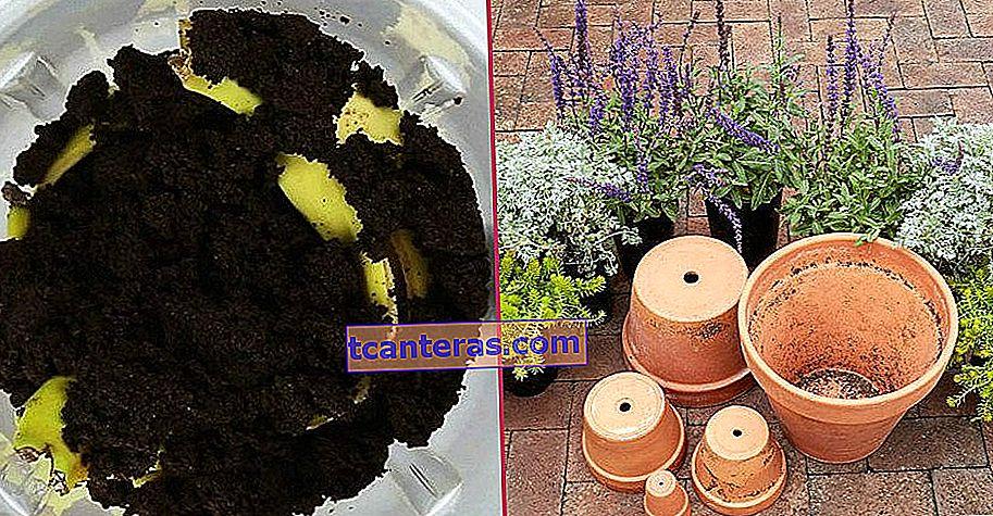 De la orquídea al geranio, cuidado de las flores paso a paso en casa con todos los consejos