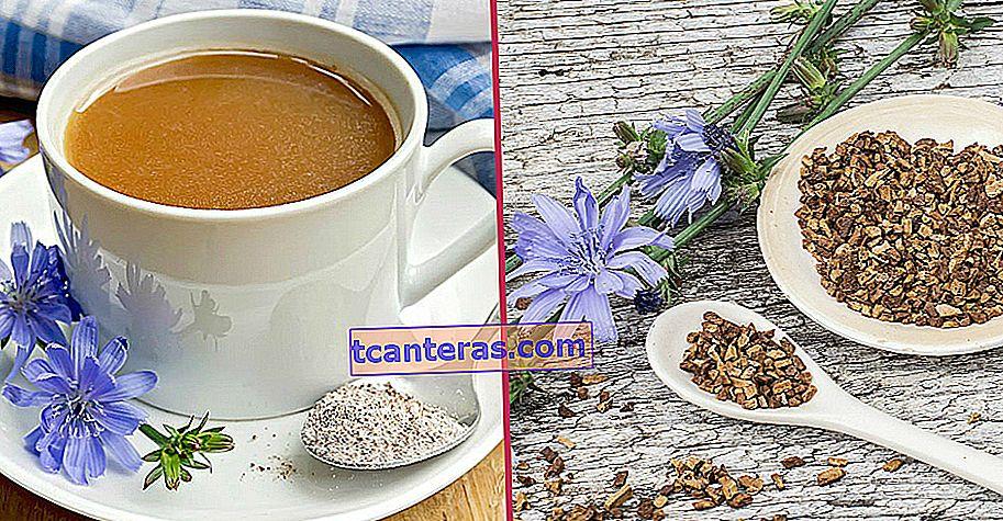 El sabor curativo que desea consumir todos los días cuando ve sus beneficios: achicoria