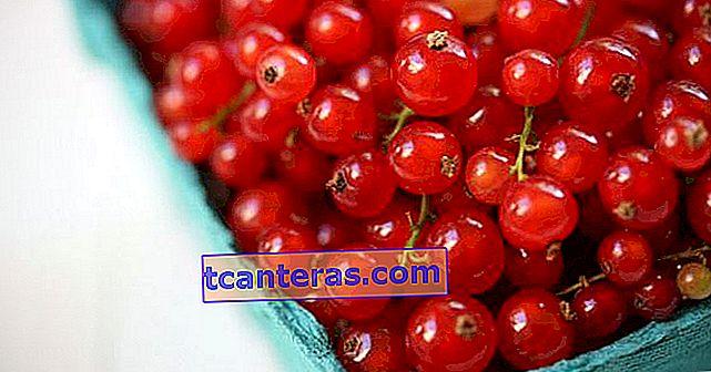 Fruta minúscula con 100 gramos de tres veces más de la vitamina C diaria necesaria: grosella