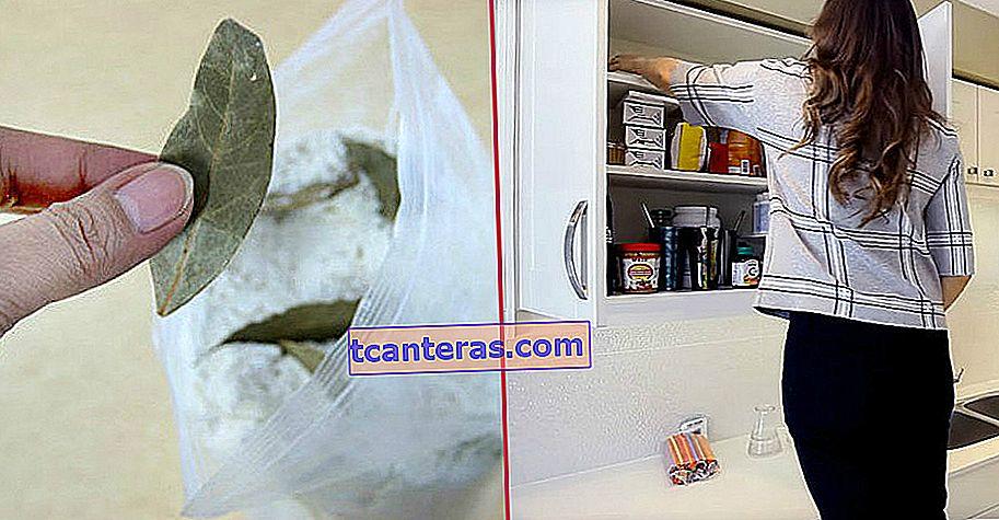 ¿Cómo limpiar fácilmente las polillas que se producen en las cocinas con unos pocos materiales?