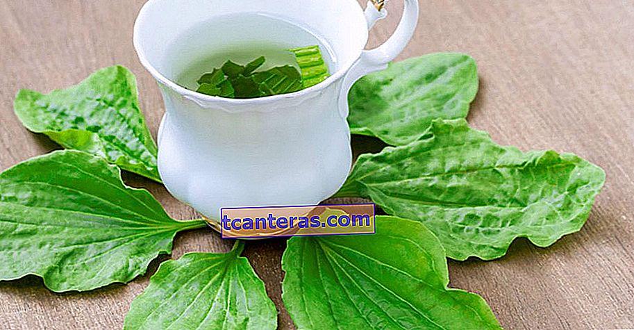 Un sabor curativo que debes descubrir antes de que llegue el invierno: Plantae