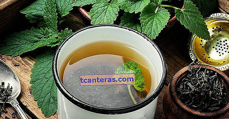 Un sabor curativo que es una solución a muchos problemas, desde herpes hasta problemas estomacales en poco tiempo: té de melisa