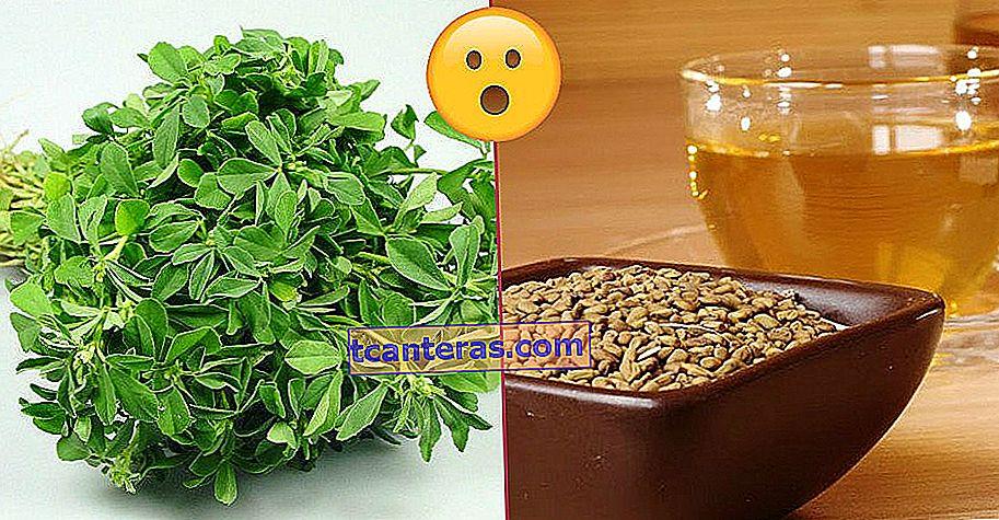 Tienes muchas razones para invitarla a tu cocina: el fenogreco y sus semillas