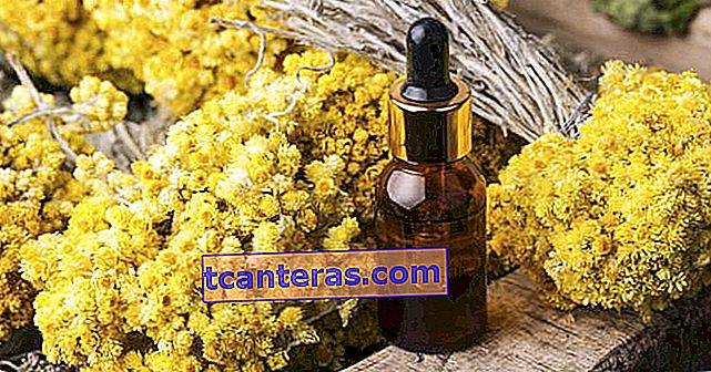 Una hierba exquisita con sus beneficios, incluso su elegancia: hierba dorada