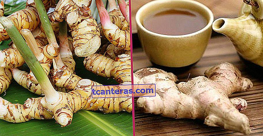 Con sus beneficios, este sabor curativo que hará olvidar incluso al jengibre: Galangal