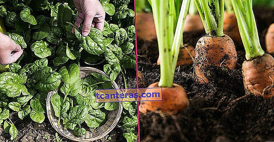 10 verduras y frutas que quizás nunca hayas sabido que puedes cultivar fácilmente en macetas